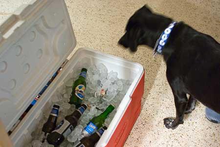 beer cooler dog