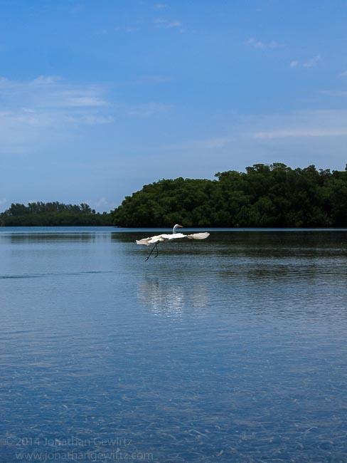 Circumnavigating Key Biscayne by Kayak
