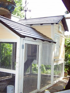 The coop, completed and painted.