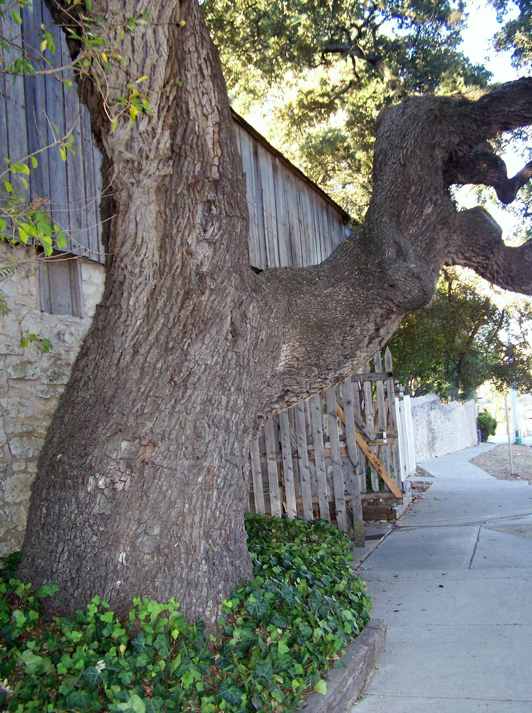 Tree by Nimitz Stable