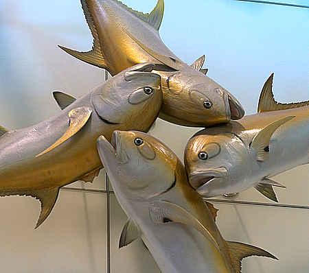MIA fish