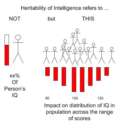 Heritability of IQ